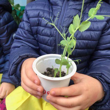 Scuola dell'Infanzia Paritaria Bari New Snoopy festa nazionale degli alberi